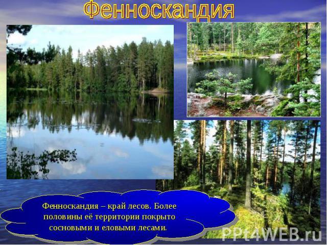 ФенноскандияФенноскандия – край лесов. Более половины её территории покрыто сосновыми и еловыми лесами.