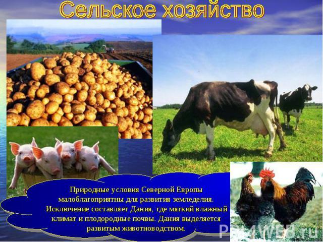 Сельское хозяйствоПриродные условия Северной Европы малоблагоприятны для развития земледелия. Исключение составляет Дания, где мягкий влажный климат и плодородные почвы. Дания выделяется развитым животноводством.