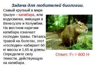 Задача для любителей биологии.Самый крупный в мире грызун – капибара, или водосв