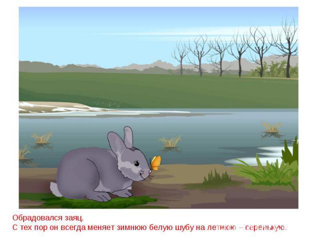 Обрадовался заяц.С тех пор он всегда меняет зимнюю белую шубу на летнюю – серенькую.
