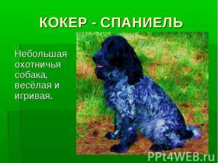 КОКЕР - СПАНИЕЛЬ Небольшая охотничья собака, весёлая и игривая.