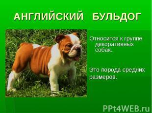 АНГЛИЙСКИЙ БУЛЬДОГОтносится к группе декоративных собак. Это порода средних разм