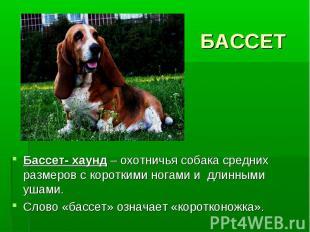 БАССЕТБассет- хаунд – охотничья собака средних размеров с короткими ногами и дли
