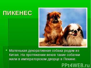 ПИКЕНЕСМаленькая декоративная собака родом из Китая. На протяжении веков такие с