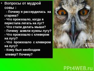 Вопросы от мудрой совы : - Почему я рассердилась на старика?- Что произошло, ког