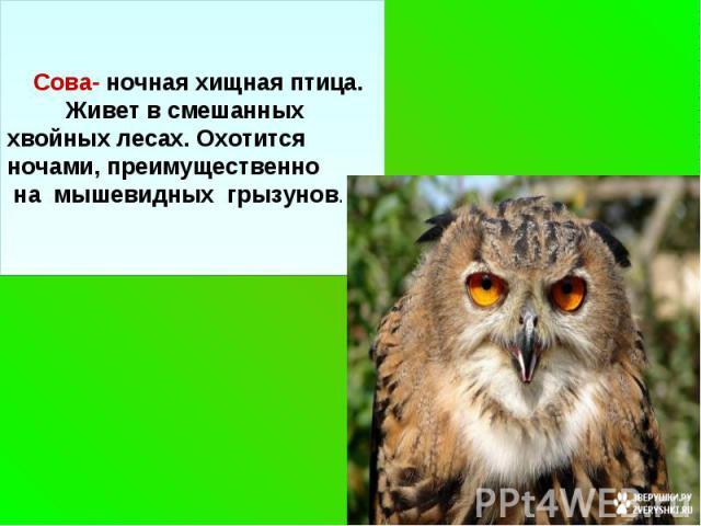 Сова- ночная хищная птица. Живет в смешанных хвойных лесах. Охотится ночами, преимущественно на мышевидных грызунов.