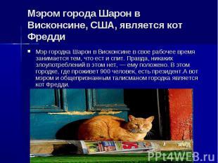 Мэром города Шарон в Висконсине, США, является кот ФреддиМэр городка Шарон в Вис
