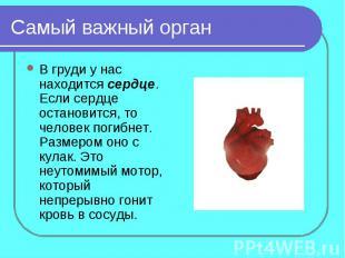 Самый важный органВ груди у нас находится сердце. Если сердце остановится, то че