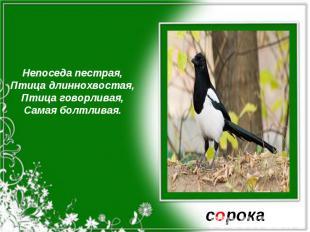Непоседа пестрая,Птица длиннохвостая,Птица говорливая,Самая болтливая.