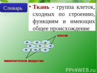 Словарь Ткань - группа клеток, сходных по строению, функциям и имеющих общее про