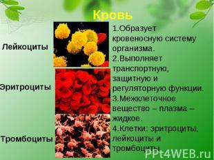 Кровь1.Образует кровеносную систему организма.2.Выполняет транспортную, защитную