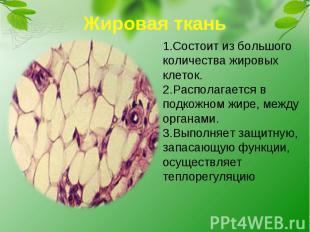 Жировая ткань1.Состоит из большого количества жировых клеток.2.Располагается в п