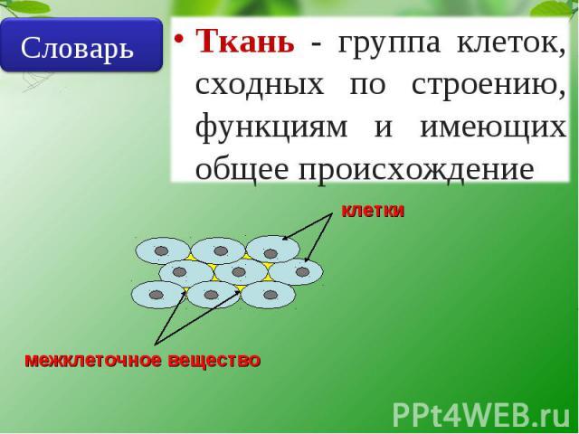 Словарь Ткань - группа клеток, сходных по строению, функциям и имеющих общее происхождение