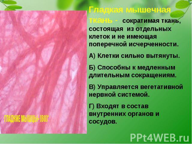 Гладкая мышечная ткань - сократимая ткань, состоящая из отдельных клеток и не имеющая поперечной исчерченности.А) Клетки сильно вытянуты.Б) Способны к медленным длительным сокращениям.В) Управляется вегетативной нервной системой.Г) Входят в состав в…