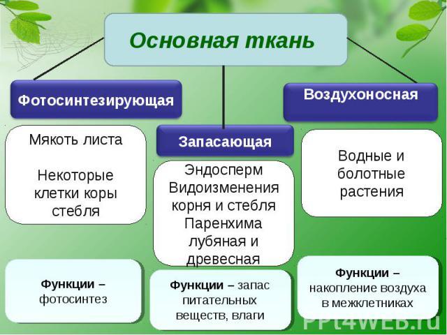 Основная ткань Мякоть листаНекоторые клетки коры стебляЭндоспермВидоизменения корня и стебляПаренхима лубяная и древеснаяВодные и болотные растения