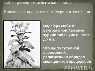 Табак – растение семейства пасленовых.В диком виде произрастает в Америке и Авст