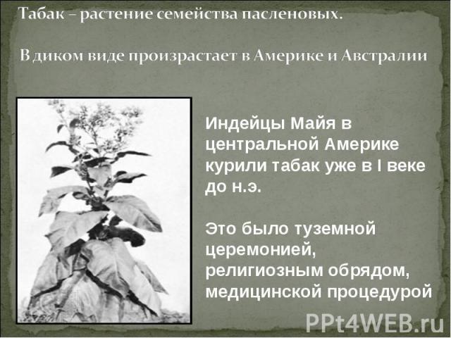 Табак – растение семейства пасленовых.В диком виде произрастает в Америке и АвстралииИндейцы Майя в центральной Америке курили табак уже в I веке до н.э. Это было туземной церемонией, религиозным обрядом, медицинской процедурой