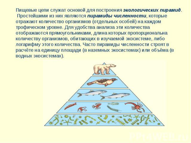 Пищевые цепи служат основой для построения экологических пирамид. Простейшими из них являются пирамиды численности, которые отражают количество организмов (отдельных особей) на каждом трофическом уровне. Для удобства анализа эти количества отображаю…