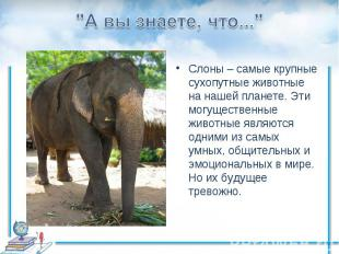 """""""А вы знаете, что...""""Слоны – самые крупные сухопутные животные на нашей планете."""