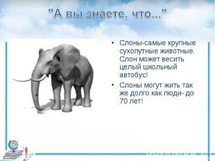 """""""А вы знаете, что...""""Слоны-самые крупные сухопутные животные. Слон может весить"""