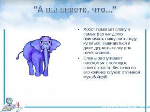 """""""А вы знаете, что...""""Хобот помогает слону в самых разных делах: принимать пищу,"""