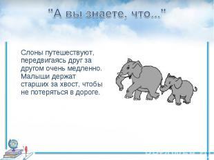 """""""А вы знаете, что...""""Слоны путешествуют, передвигаясь друг за другом очень медле"""