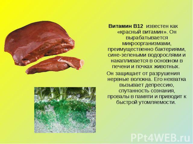 Витамин В12 известен как «красный витамин». Он вырабатывается микроорганизмами, преимущественно бактериями, сине-зелеными водорослями и накапливается в основном в печени и почках животных. Он защищает от разрушения нервные волокна. Его нехватка выз…