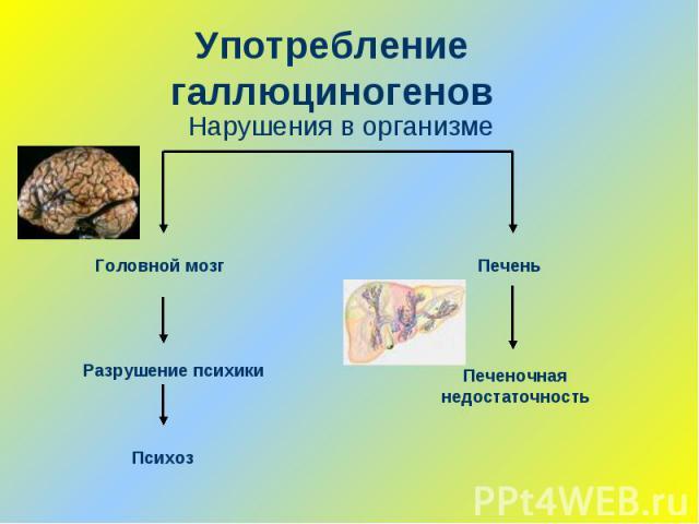 Употребление галлюциногеновНарушения в организме