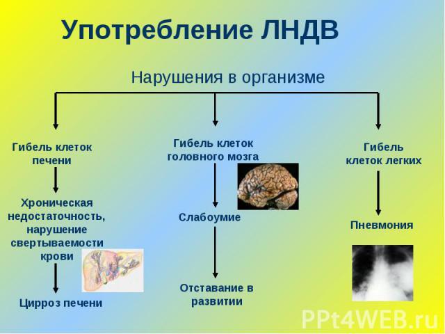 Употребление ЛНДВНарушения в организме