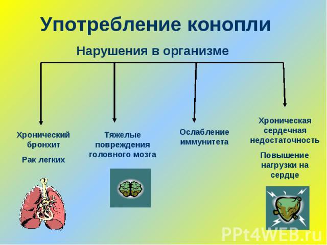 Употребление коноплиНарушения в организме