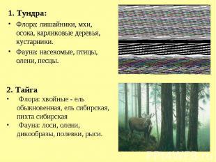 1. Тундра:Флора: лишайники, мхи, осока, карликовые деревья, кустарники.Фауна: на