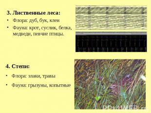 3. Лиственные леса:Флора: дуб, бук, кленФауна: крот, суслик, белка, медведи, пев
