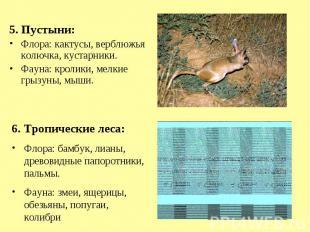 5. Пустыни:Флора: кактусы, верблюжья колючка, кустарники.Фауна: кролики, мелкие