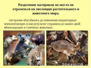 .Разделение материков не могло не отразиться на эволюции растительного и животно