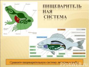 Пищеварительная системаСравните пищеварительную систему лягушки и рыбы.