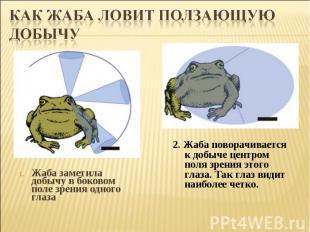 Как жаба ловит ползающую добычуЖаба заметила добычу вбоковом поле зрения одного