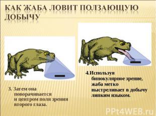 Как жаба ловит ползающую добычу3. Затем она поворачивается ицентром поля зрения