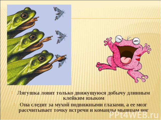 Лягушка ловит только движущуюся добычу длинным клейким языкомОна следит за мухой подвижными глазами, аее мозг рассчитывает точку встречи и команды мышцам ног