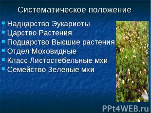 Систематическое положениеНадцарство ЭукариотыЦарство РастенияПодцарство Высшие р