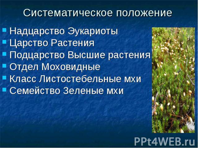 Систематическое положениеНадцарство ЭукариотыЦарство РастенияПодцарство Высшие растенияОтдел МоховидныеКласс Листостебельные мхиСемейство Зеленые мхи