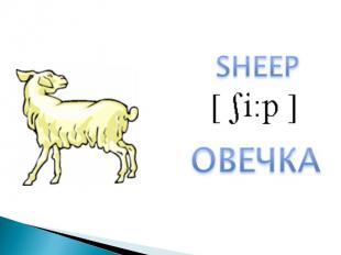 SHEEPОВЕЧКА