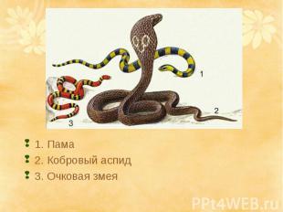 1. Пама2. Кобровый аспид3. Очковая змея