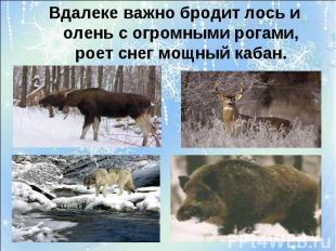Вдалеке важно бродит лось и олень с огромными рогами, роет снег мощный кабан.