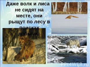 Даже волк и лиса не сидят на месте, они рыщут по лесу в поисках добычи.