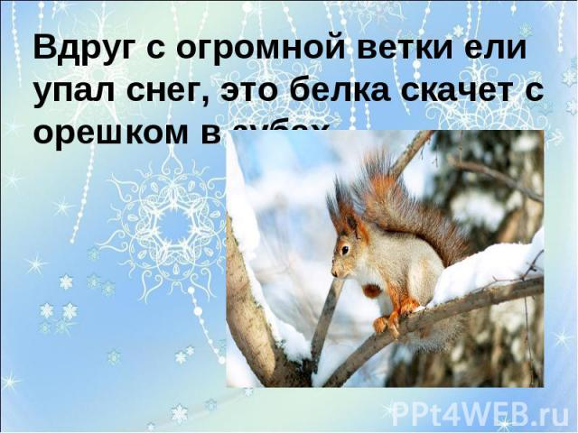 Вдруг с огромной ветки ели упал снег, это белка скачет с орешком в зубах.