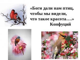 «Боги дали нам птиц,чтобы мы видели,что такое красота….» Конфуций