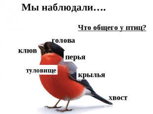 Мы наблюдали….Что общего у птиц?