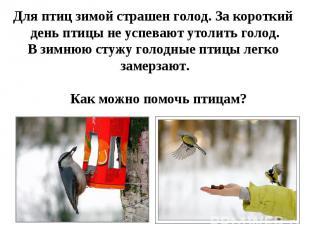 Для птиц зимой страшен голод. За короткий день птицы не успевают утолить голод.В