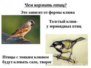 Чем кормить птиц?Это зависит от формы клюваТолстый клюв- у зерноядных птицПтицы