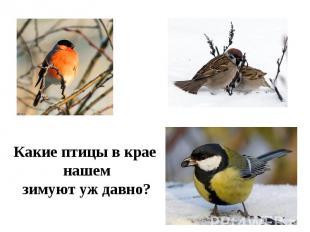 Какие птицы в крае нашемзимуют уж давно?